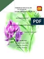 Alfalfa Jokasta