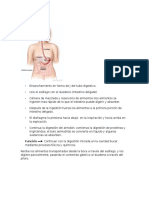 Sistema Digestivo 2da Parte.