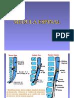 Respaldo Medula
