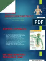 Ppt Sistema Nervioso Periferico