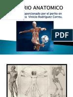 1 abaa In BREVARIO ANATOMICO.pdf