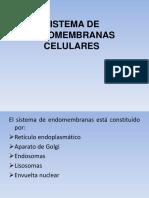 Reticulo Endoplasmatico Carmen