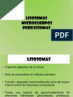 Lisosomas y Microcuerpos Carmen