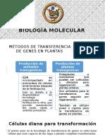 Transgenesis de Plantas