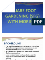 Square Foot Gardening With Moringa