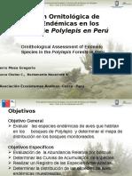 Aves Polylepis Peru