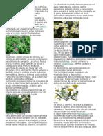 40 Tipos de Plantas