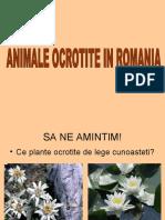 Animale Ocrotite in Romania