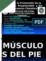Musculo Del Pie-Anatomia