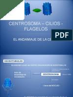 centrosoma, cilios y flagelos 2012.ppt