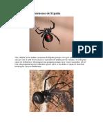Las 5 Arañas Venenosas de España