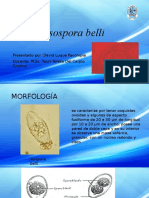 Isospora Belli