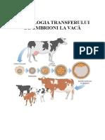 Transfer de Embrioni Pentru Bovine