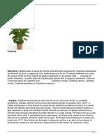 calathea.pdf