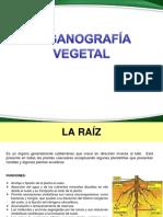 3.1.-Organografía-vegetal_Raíz_Tallo_Yemas.pdf