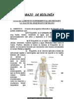 EL ESQUELETO - BIOLOGÍA.doc