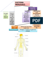 1. Encuadre Neuroanatomía Sistema Nervioso