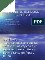 Especies en Extincion en Bolivia1