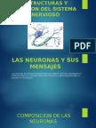 Estructuras y Funcion Del Sistema Nervioso