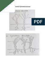 Jenis - Jenis Lamun.pdf