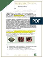 RAZAS DE ROYA.docx