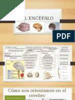agenesia cerebelosa pdf