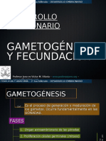 gametognesisyfecundacin-100117120438-phpapp02