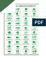 Pcog - Leaf Morphology