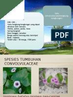 kelompok-6-convolvulaceae