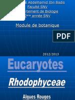 Rhodophyceae