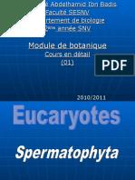 Spermaphytes