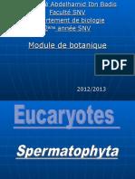 Spermaphytes1