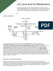 Uric Acid and Its Metabolism
