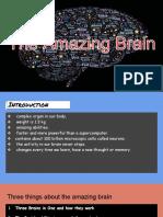 The Amazing Brain