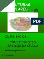aula estruturas celulares