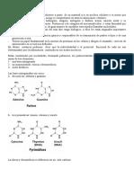 15-Acidos nucleicos