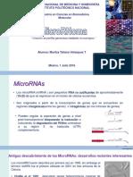 Microrna PDF