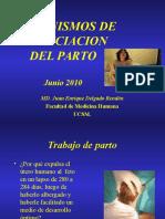 1-teoriaswparto-100727221159-phpapp01.ppt
