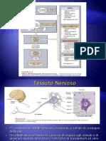 Tessuto nervoso.pdf