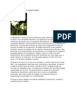 Manzanilla Usos Medicinales.