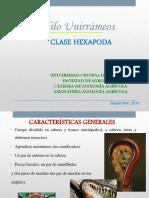 5-Presentación Clase Hexapoda Única 2010.pdf