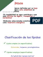 Lipidos estructura