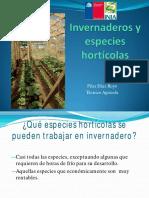 Invernaderos Especies Horticolas