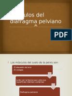 Músculos Del Diafragma Pelviano