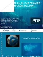 un gigante en el mar peruano (el tiburón ballena)