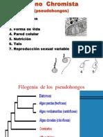 oomycota micologia.pdf