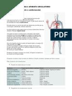 Anatomia Tema 4
