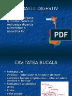 anatomie APARATUL DIGESTIV
