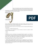 Vesicula PDF