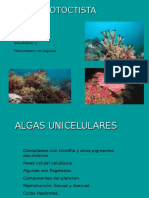 R 02 Protoctistas - Algas